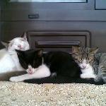 los gatitos del hotel