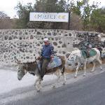 Mules partant au travail le matin
