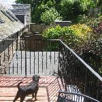 Our Patterdale surveying the garden