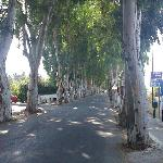 Tree lined road outside the Rodo Cypria