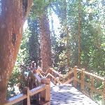 Bosque de los Arrayanes