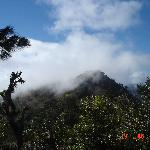 The Cloud Forest in Celaque National Park