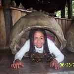 caparazón  de  las  desaparecidas  galápagos gigantes