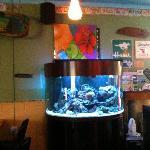 Gorgeous aquariums