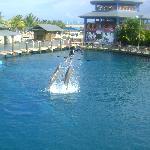 Dolphins AMAZING