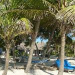 Beautiful palm filled beach area with cabanas