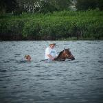 Horse wading in the bay.