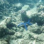 bluestar fish snorkeling in front of Lalati