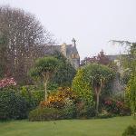 scene from garden