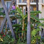 C&R 2008 Garden view