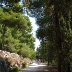 One of the main paths on the hill