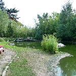 Giardino dell'hotel con il laghetto dei cigni