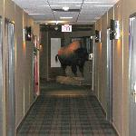 buffalo in the hallway outside of our room