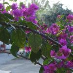 flowers near by