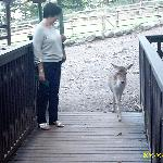 Rispetto degli animali e della natura