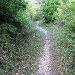 the old stone road/path