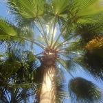 Delta Sharm Resort ภาพถ่าย