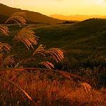 夕日に輝くススキ野原