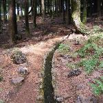 A small levada winds through woodlands.