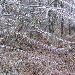 Frozen Rainの後でできた「ガラスの森」