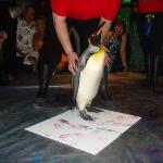 Penguin painting at Moody Gardens in Galveston