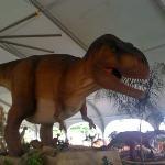 T-Rex at Moody Gardens