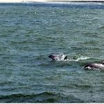 Dolphins :-)