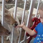 Son #1 was ALL ABOUT feeding the deer.