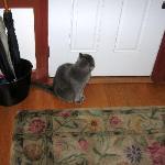 Blue - the B&B Housecat
