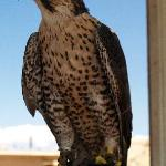 Resident at the Wildlife Center, Espanola, NM