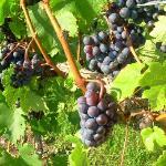 Foto de Chateau Grand Traverse Winery
