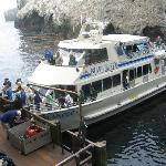 Island Packers Tour Boat