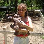 Il existe un refuge pour les animaux pas loin du Korrigan Lodge