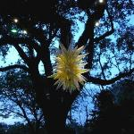 Chihuly blown glass sculpture-special 2007 exhibit at  Fairchild Tropical Botanical Gardens