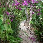 A stroll through the Gardens!
