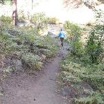 Good hiking trails along the Metolius River