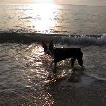 """Our Boston terrier Charlie at """"Ruby's Resort"""""""