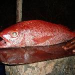 beatufiul ruby snapper for dinner!