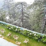 View of garden and pine forest from hotel