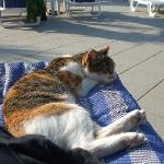 Friendly cat who visits the pool area
