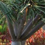 Unusual tree in the gardens