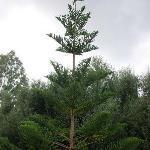 Un des nombreux arbres