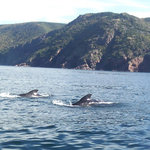Whale Cruisers Foto