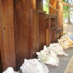 decorative conch shells along the steps to the house