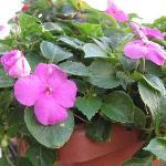 窓にあった花