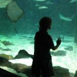 Watching the sting rays float by