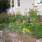 The side flower bed - fabulous even in mid-October!