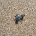 we released sea turtles