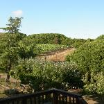 Point Reyes Vineyard Inn Bild