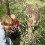 "feeding the deer on the ""long"" walk"
